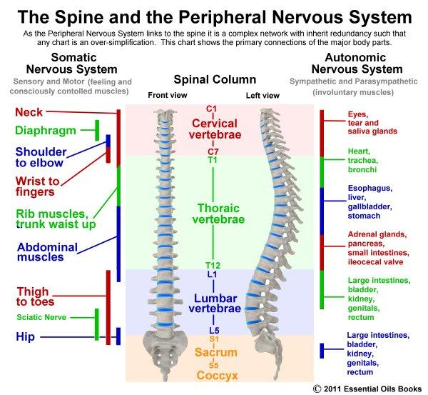 SpineFinalsmall